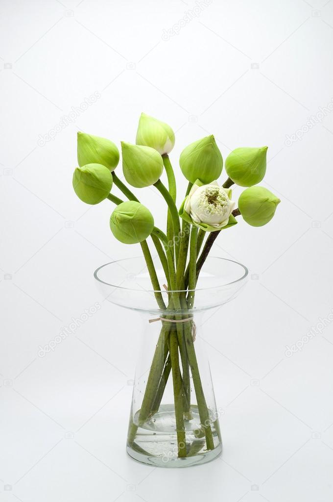 Lotusblume weißer Hintergrund — Stockfoto © kitthanes_r.hotmail.com ...