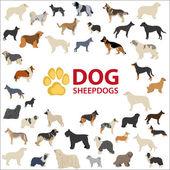Fotografie Sheepdogs Hunderassen
