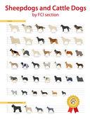 Fotografie FCI-Sheepdogs und Sennenhunde