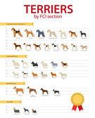 Fotografie Terrier Hunderassen nach Fci
