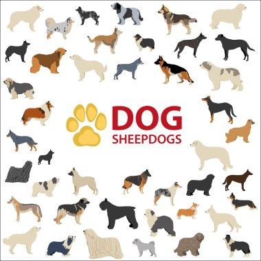 Dog Sheepdogs breeds