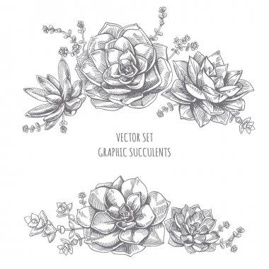 Floristic composition of succulents.