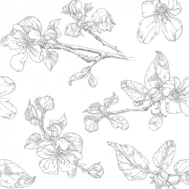 Ink graphics. Blossoming branch of apple tree.