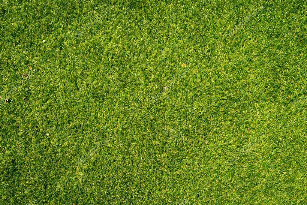 Gazon naturel texture fond motifs en gazon de golf de la - Cesped natural ...