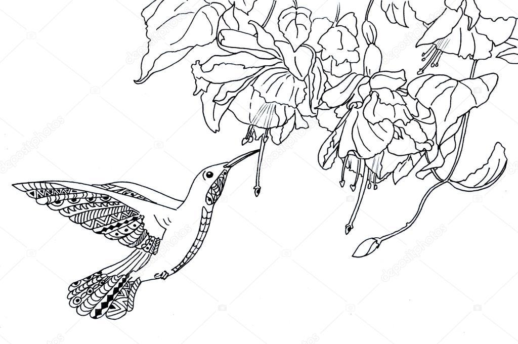 Boyama Sayfası Sinek Kuşu Illüstrasyon Stok Foto Larisakuzovkova