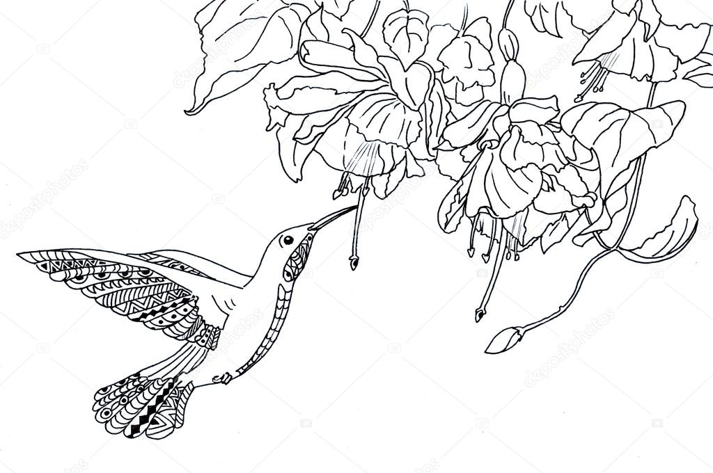 Farb-Seite The Hummingbird Abbildung — Stockfoto © larisakuzovkova ...