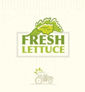 Farm Fresh Lettuce Salad Background