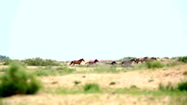 Stádo koní běží na stepi. Zpomalený pohyb