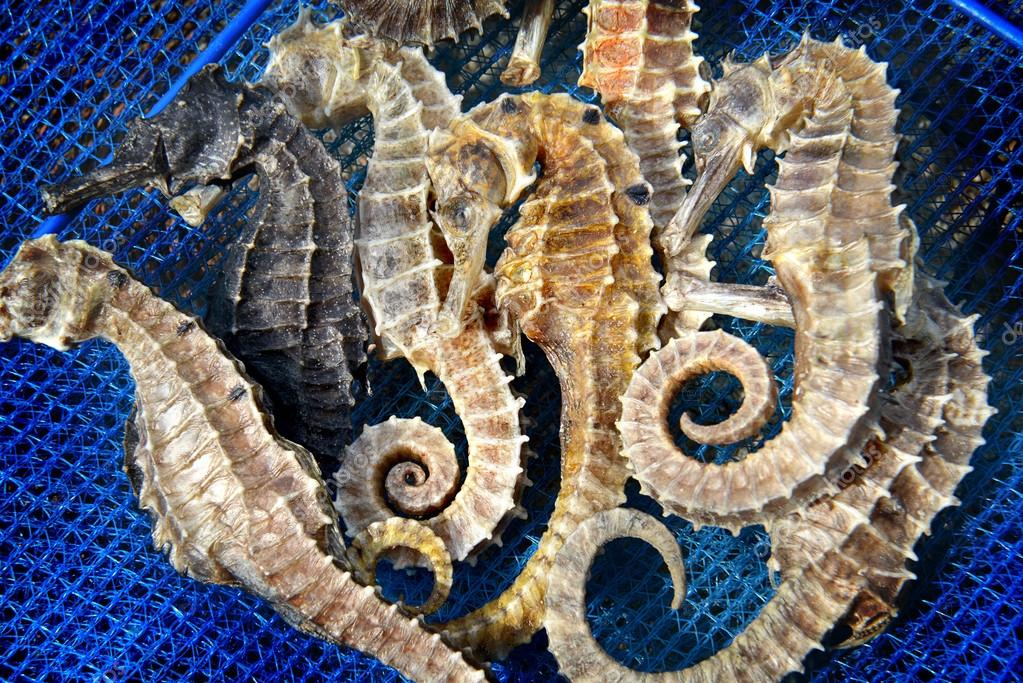 body and texture of dry seahorse photo in outdoor one side sun lighting and dark shadow u foto de
