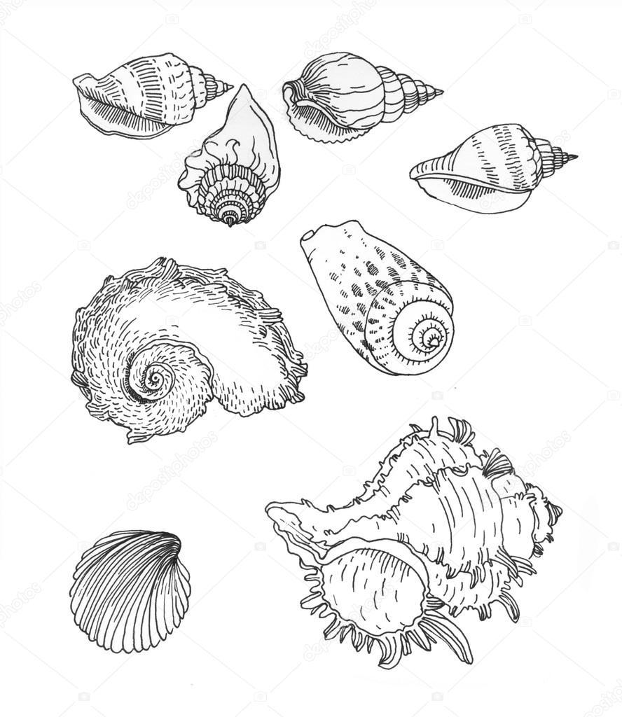 Set of hand drawn sea shells.