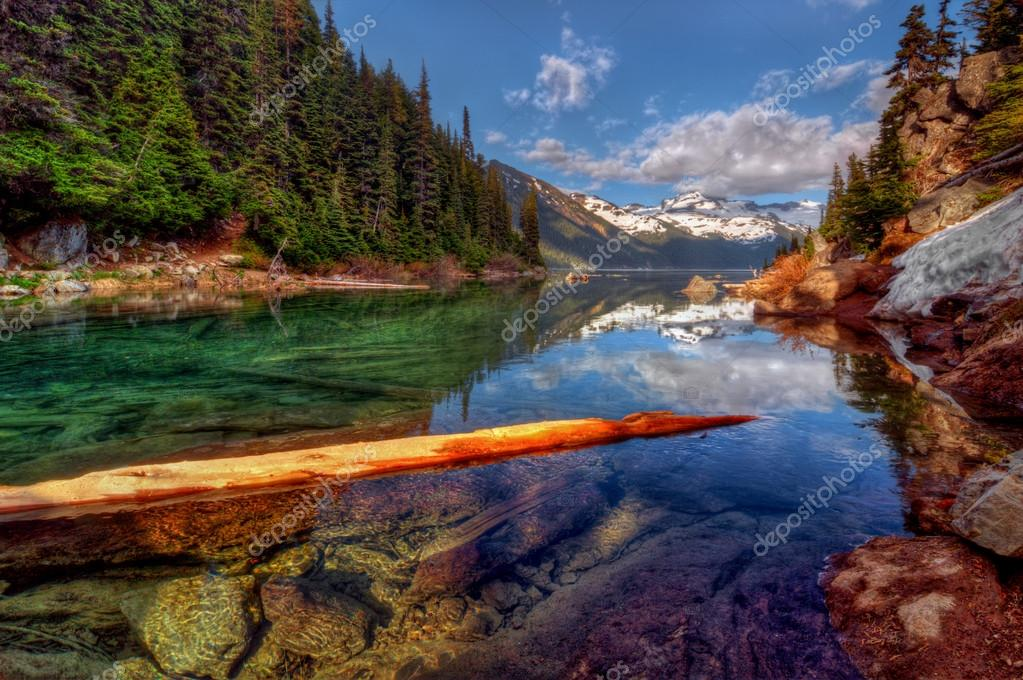Floating log in lake