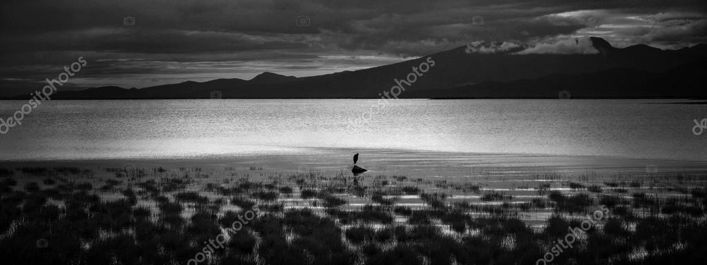 Sillhouette of a heron on a beach