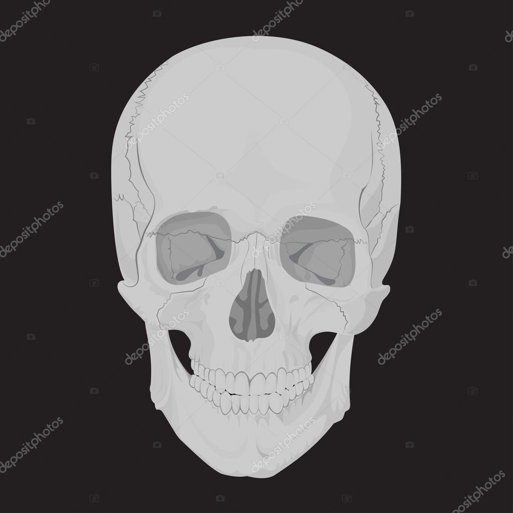 menschlicher Schädel Knochen Skelett tot — Stockvektor © lu ...