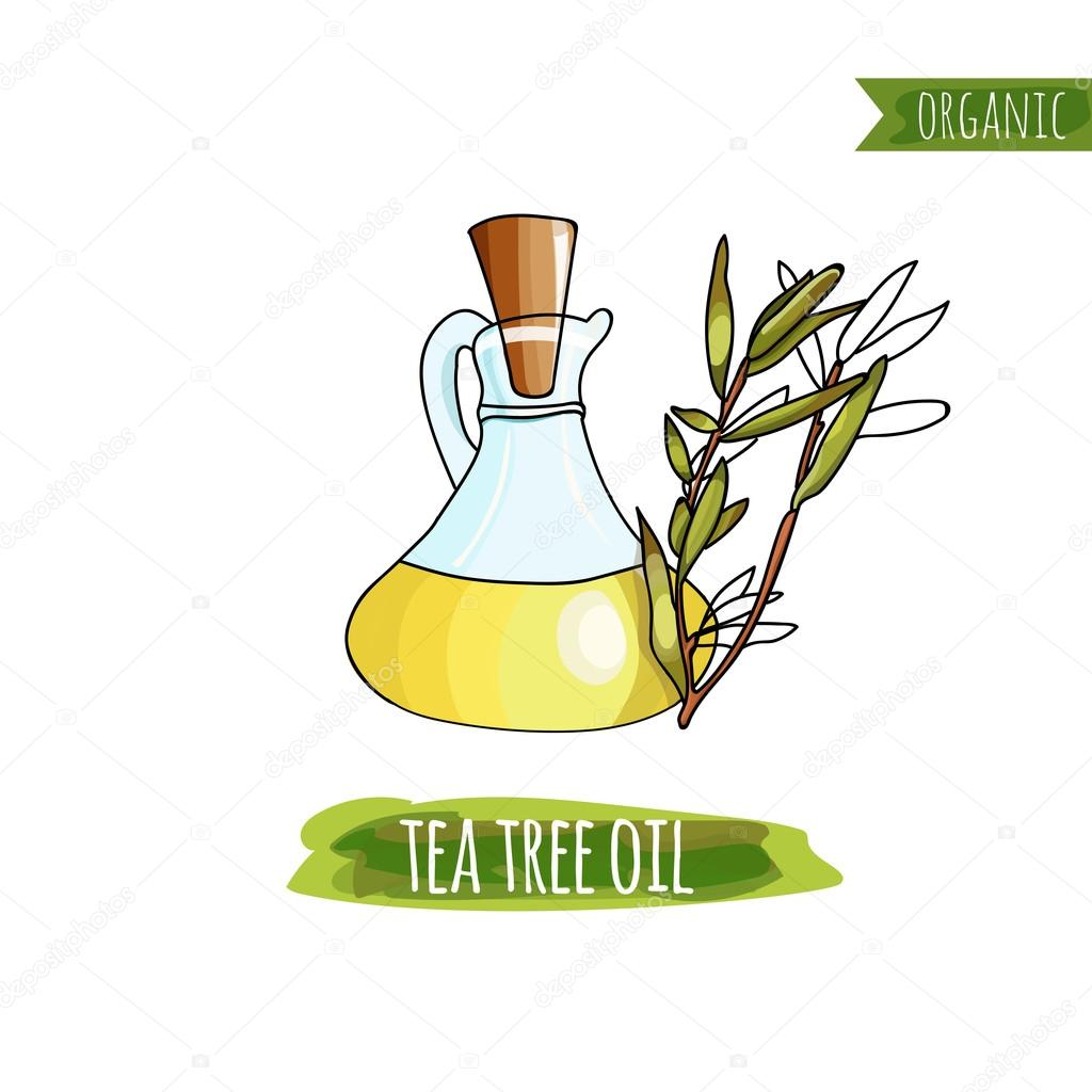 Bottle of  Tea Tree Oil and  painted in watercolor style. Organics.