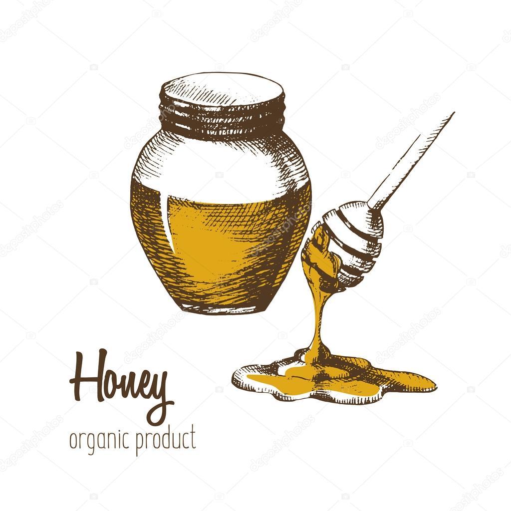 glas mit honig und l ffel honig auf einem wei en hintergrund zeichnen von hand skizze die bio. Black Bedroom Furniture Sets. Home Design Ideas
