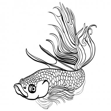Sketched hand drawn aquarium fish Cockerel