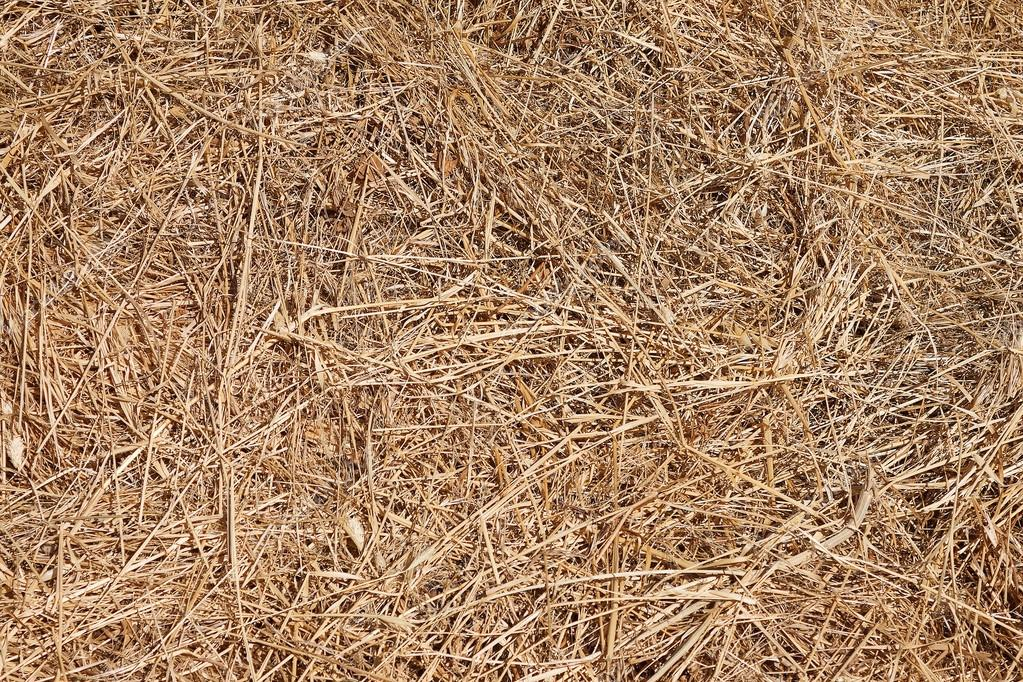 Texture hay close-up
