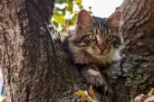 Fotografie Zelené oči kočka na stromě