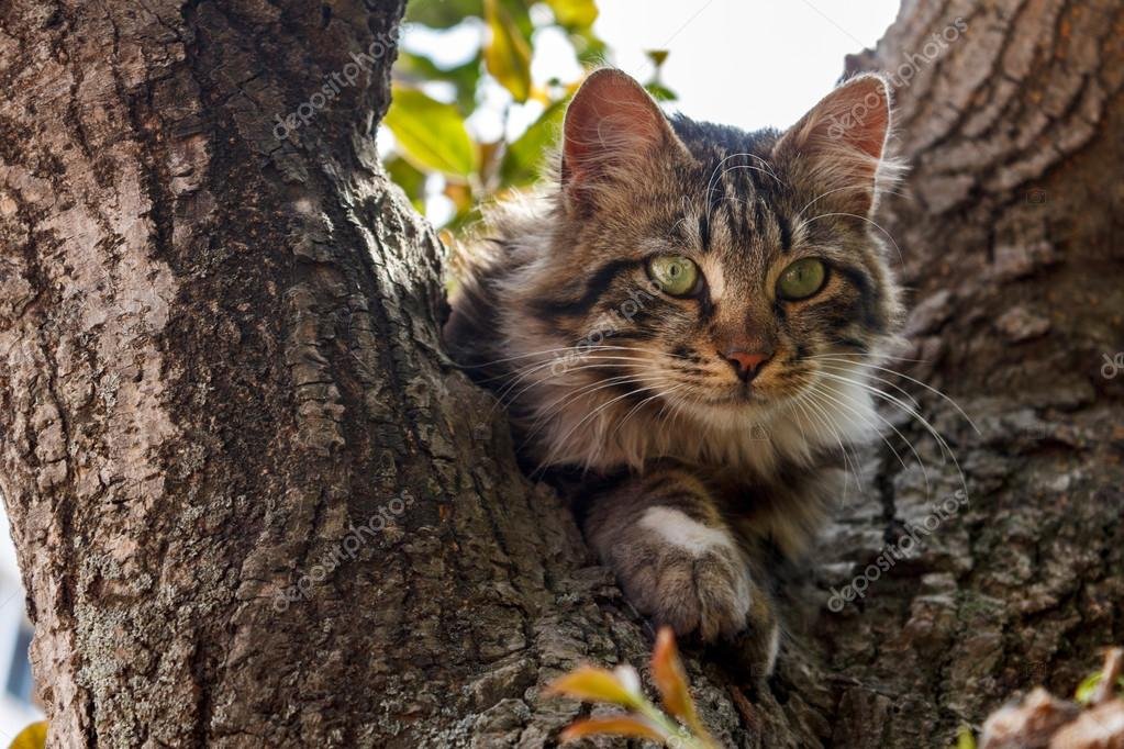 Green eyed cat on tree