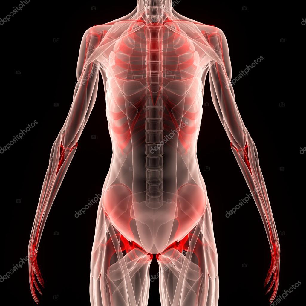 Menschlichen Muskel Körper mit Skelett — Stockfoto © magicmine ...