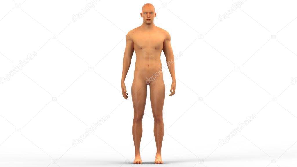masculino músculo