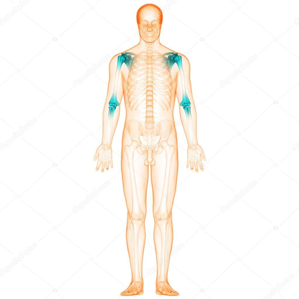 Menschlichen Körper Knochen Gelenkschmerzen — Stockfoto © magicmine ...