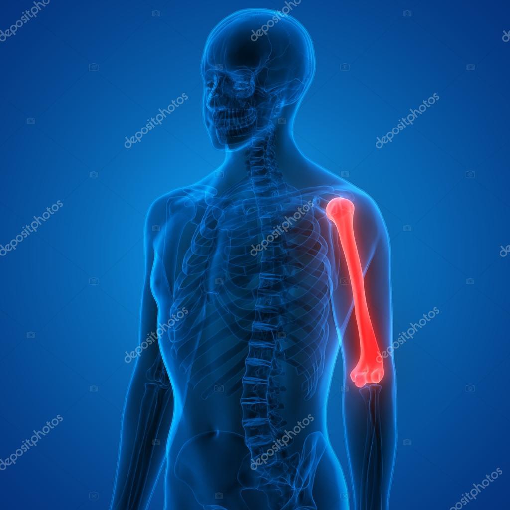 Cuerpo humano huesos dolores en las articulaciones — Foto de stock ...