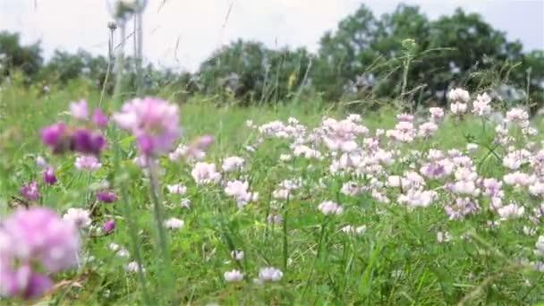 A mező a fű. zöld ég rét