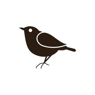 Blackbird Animals Birds
