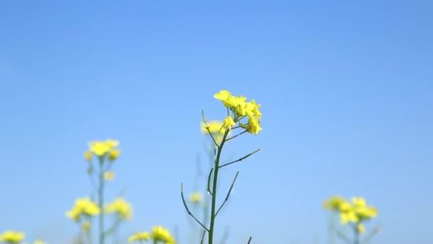 mladá žena kýchá z těžkou alergií kvítí. Alergie a zdravotní problémy, pro mladou ženu