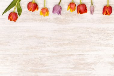 festive tulips  for greeting card