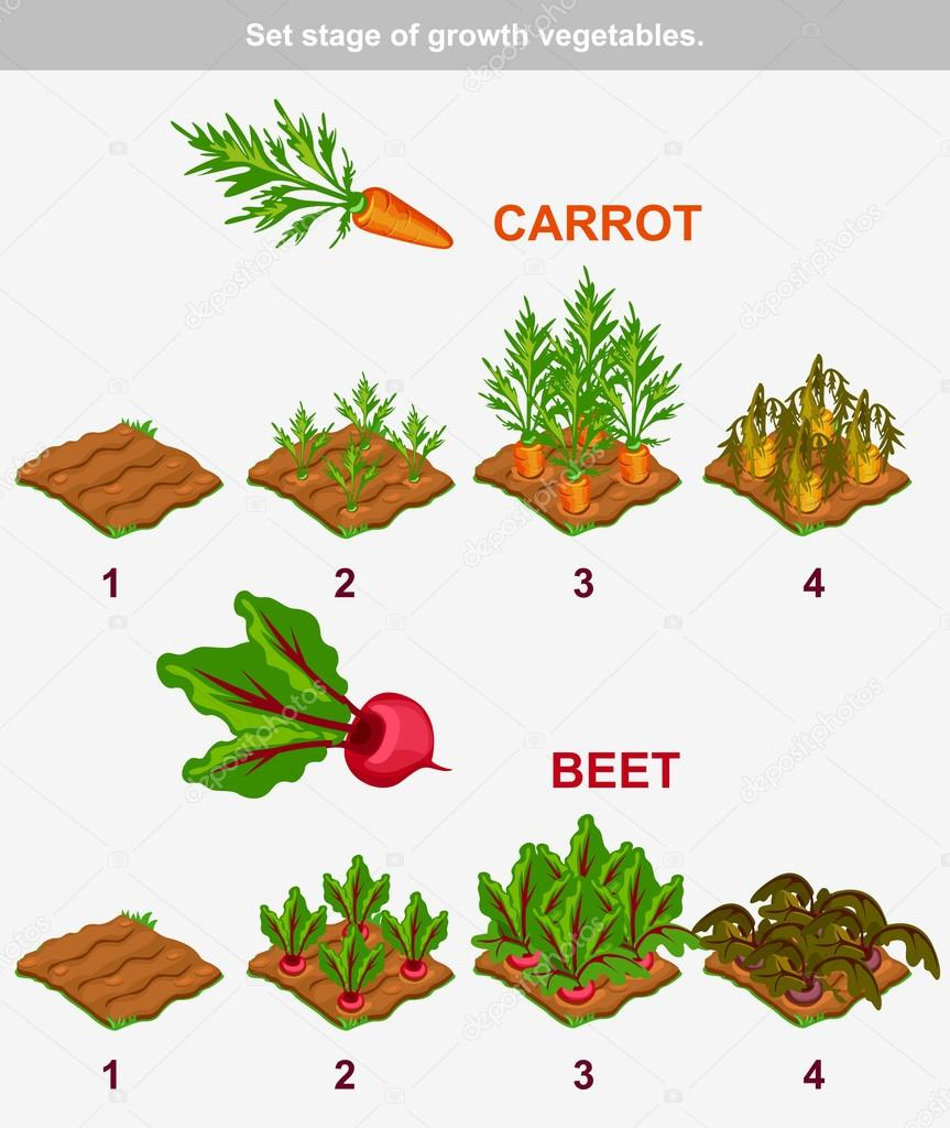 Carottes Png - Carrots Drawing - Zanahorias - Möhren - Mind Your Peas...  Mug - Free Transparent PNG Clipart Images Download