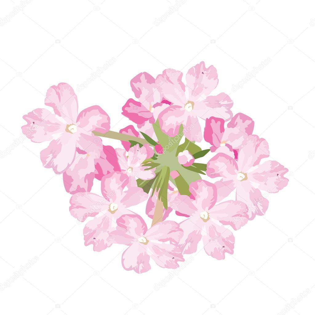 Delicate pink flowers card stok vektr inagraurymail 119960860 delicate pink flowers card watercolor flowers illustration vintage elegant card illustration for womens day birthday wedding ceremony mightylinksfo