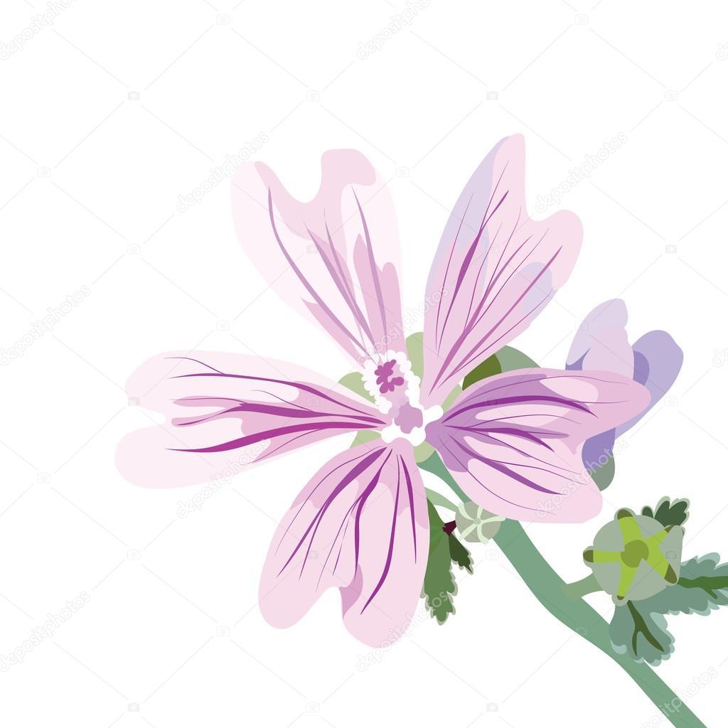 Delicate pink flower isolated stok vektr inagraurymail delicate pink flower isolated watercolor flower illustration vintage elegant illustration for womens day birthday wedding ceremony mightylinksfo