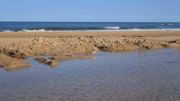Racek na pláži