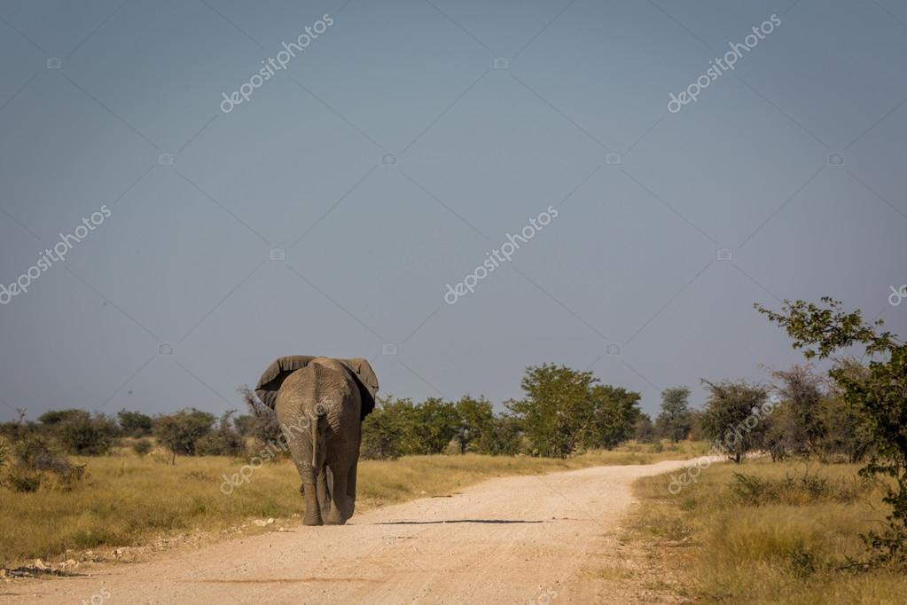 elephant crossing a road in Namibia