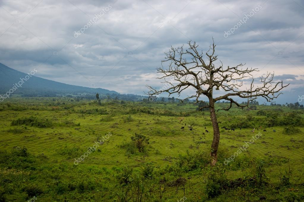 nice landscape in Virunga National Park