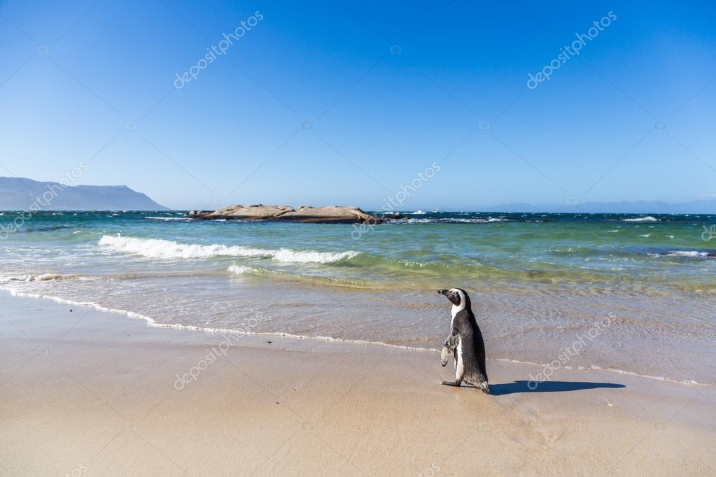 Penguin walking to water