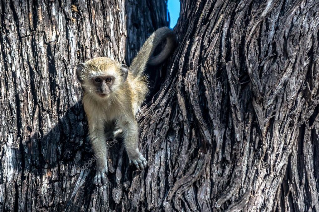 Beautiful wildlife in Chobe National Park