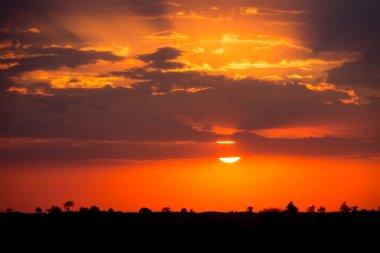 Sunset in the Serengeti National Park, Tanzania, Africa stock vector