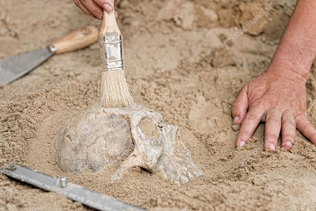 hands of anthropologist with human skull