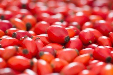 Rose hips berries