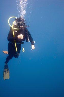 Scuba diver keşfetmek mercan