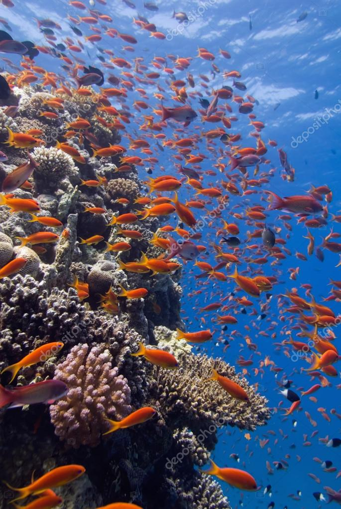 Tropical fish swimming over coral