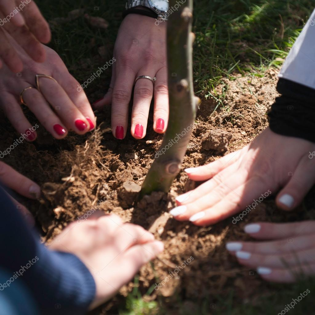 Hands of people planting tree