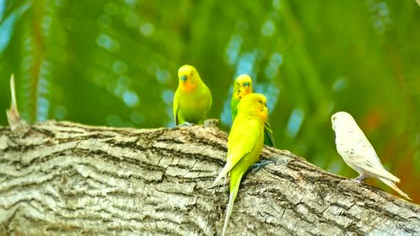 andulky, sedí na stromě