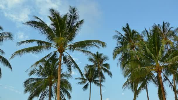 palmy proti modré obloze