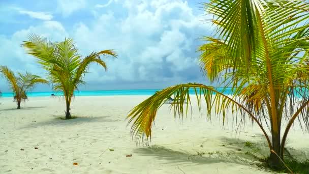 palmy na tropické pláži