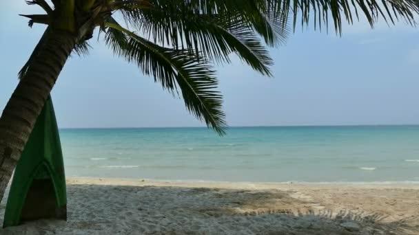 Palma na tropické pláži
