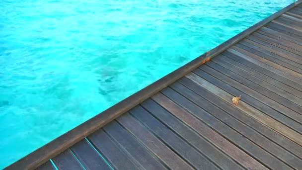 Nádherný tropický oceán v Maledivy island